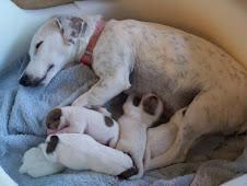 Mayka y puppies