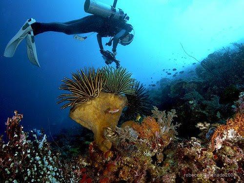 Bunaken underwater sea garden still paradise for divers and still