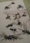 Trece hormigas