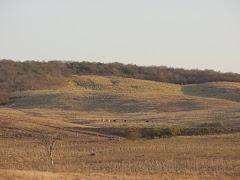 A degradação da caatinga