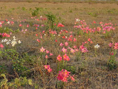 As belas flores da caatinga