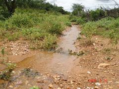 Água de chuva na caatinga V