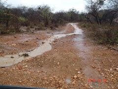 Escoamento de água de chuva na caatinga