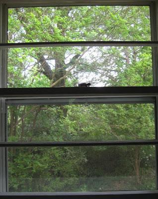 Kitchen window - original view.