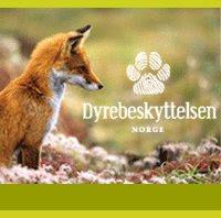 støtt dyrebeskyttelsen norge!