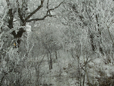 trees under heavy frost along southeast shore of Lake Herman, near state park