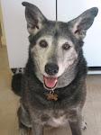 Gypsy Dog