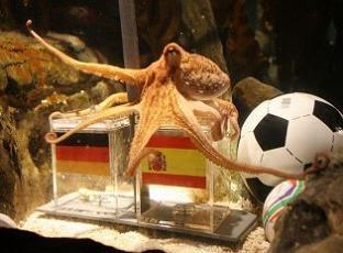 pulpo-paul-mundial-futbol-sudafrica-alemania-vs-espana-prediccion.jpg