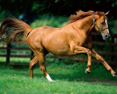 http://2.bp.blogspot.com/_EVhk1ceBDJY/SZOJbEJ80cI/AAAAAAAAA0o/TqzNX7nQK1A/s400/wallpapers-horses-p.jpg