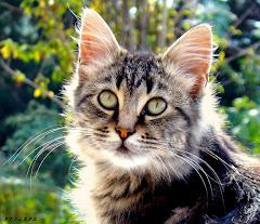 Amici gatti....