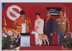Segundo puesto Handler Juvenil CIrcuito internacional de bogota 2009