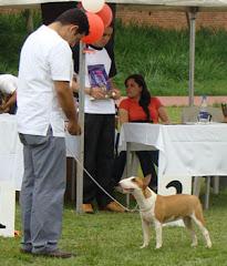 Ita Reservado de Best In Show festival circulo canino UCC