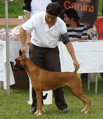 Alma gana Raza y Segunda de Grupo, Festival Circulo Canino UCC