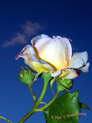 Tajanstvenim stazama duse... Sunset+Rose