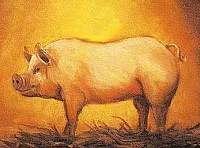 Chinese Astrology: The PIG