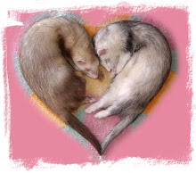 ♥ Ferret ♥ Love ♥