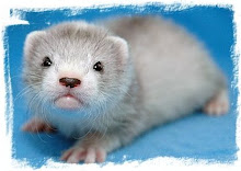 Ferret Baby ♥ Opening Eyes for the First Time ♥ Awww... 3 weeks old