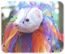 Tammy's Royal Ferret