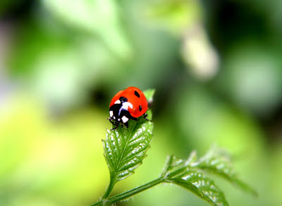 ></a><br>Usted ha visto sólo 10 fotografías. Si lo desea, puede descargar a continuación la carpeta que contiene en total 40 fotografías de insectos macro.<br><a href=