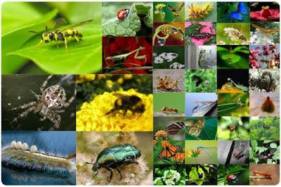 Insectos beneficiosos y perjudiciales for Insectos del jardin