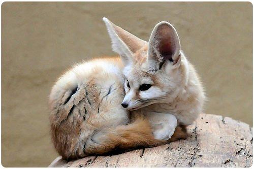 El zorro de Firefox más allá de Internet (27 fotos)