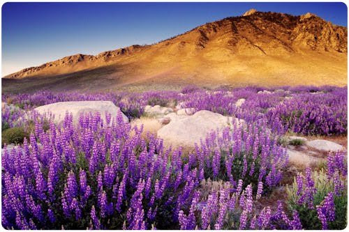 Paisajes Naturales de California (12 fotografías)