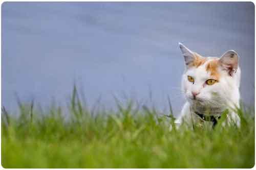 Imágenes y fotos de gatitos (11 elementos y algo más)