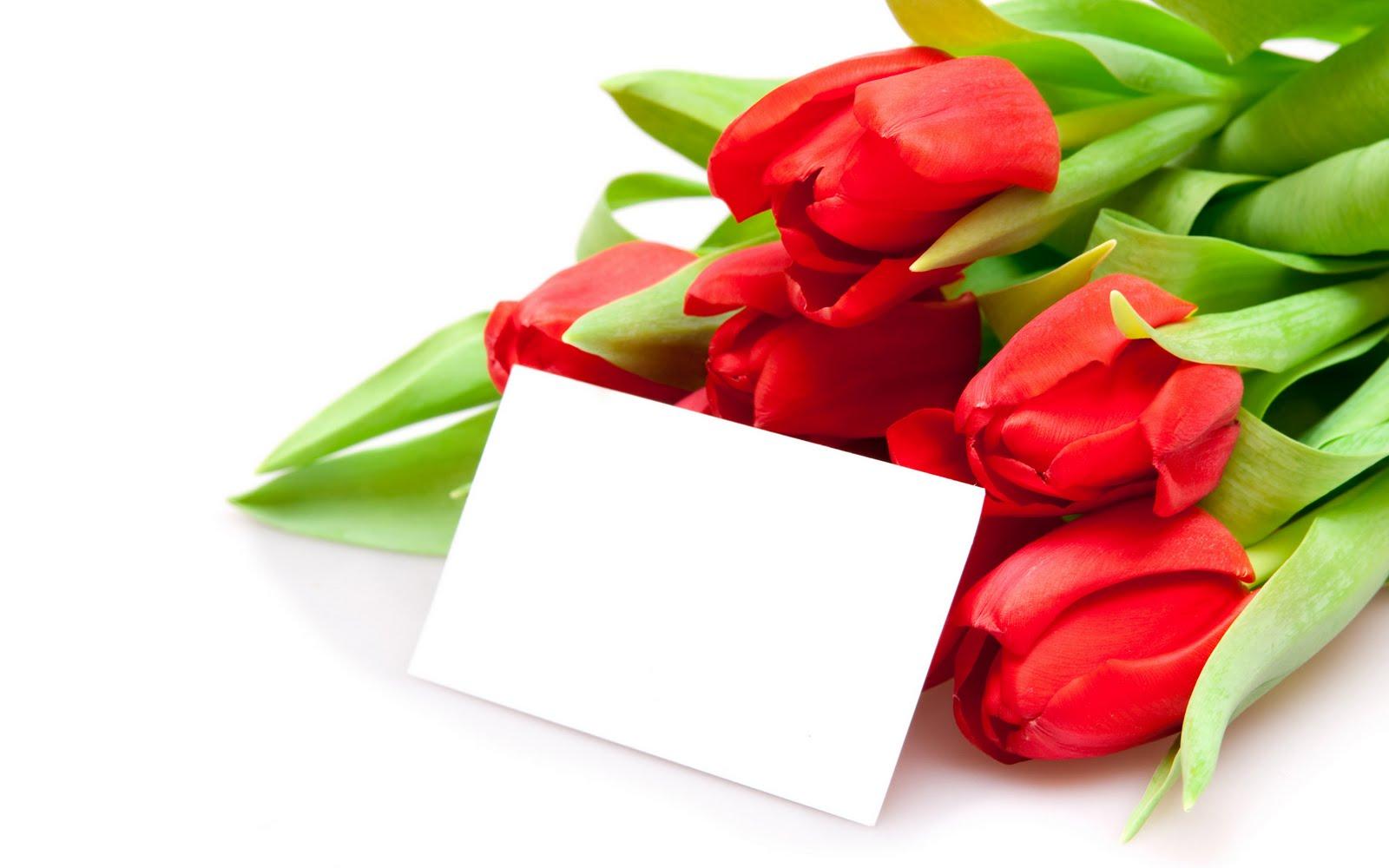 Тюльпан поздравление с днем рождения