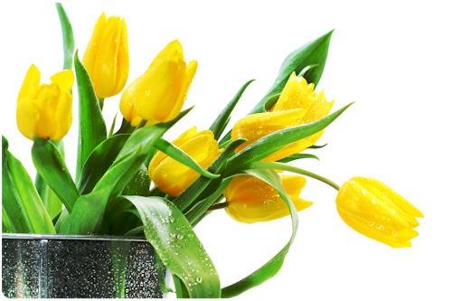 Imágenes de flores para el Día de las Madres (33 elementos)
