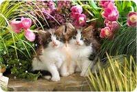 Para quienes adoran los gatitos (15 imágenes de mininos)