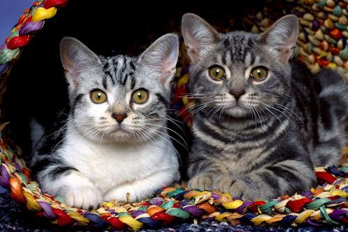 Fotos de gatitos que te harán reir (21 elementos)