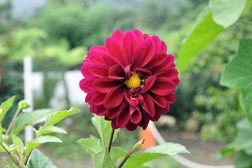 Nuevas fotos de flores gratis para todos (8 elementos)