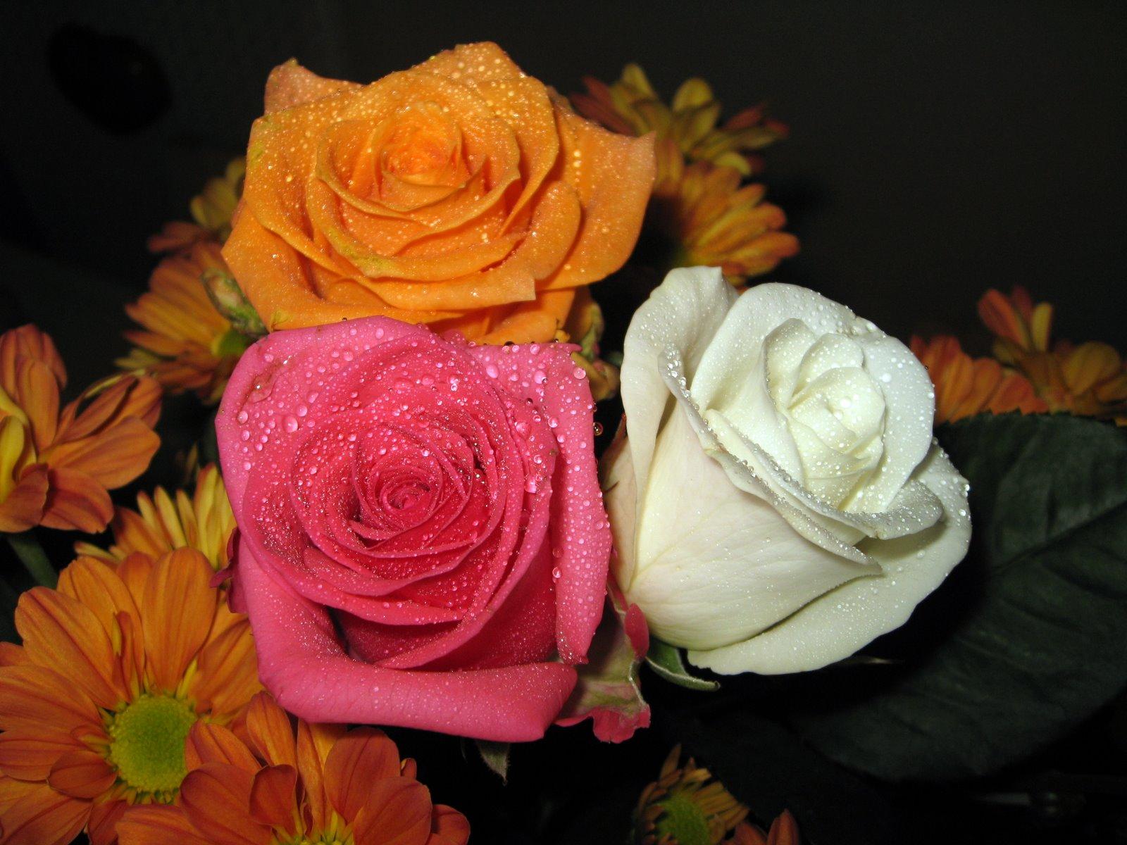 flor con mariposa de color rosa Descargar Fotos gratis - Imagenes De Mariposas Y Rosas