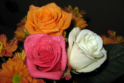 Rosas de colores parte VI (5 fotos gratis para compartir)