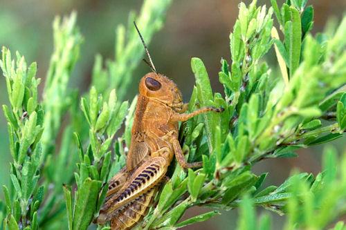 Los insectos de mi jardín V (10 imágenes gratis)