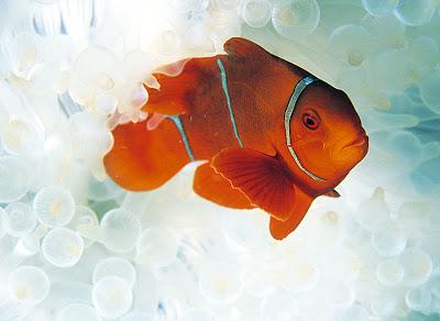 Peces en el mar II (6 fotos e imágenes acuáticas)