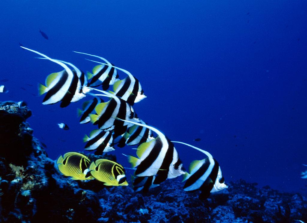 banco de im genes peces en el mar ii 6 fotos e im genes