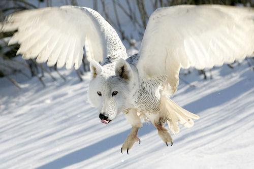 Animales increíbles I (Fotomanipulaciones en Photoshop)