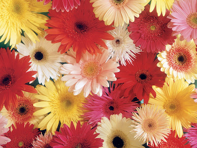 Flores del campo VI (7 beautiful colors flowers)