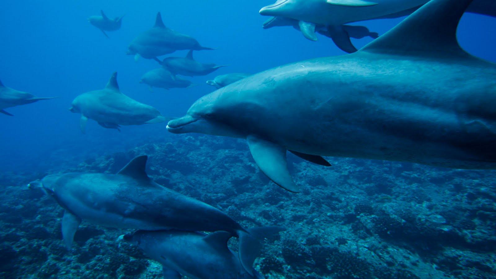 Viaje por el fondo del mar alta definicion taringa - Fotos fondo del mar ...
