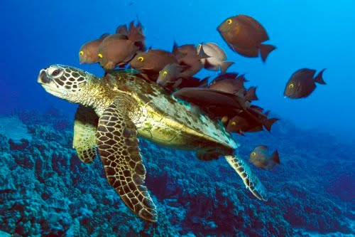 Viaje por el fondo del mar IV (Animales Acuáticos)