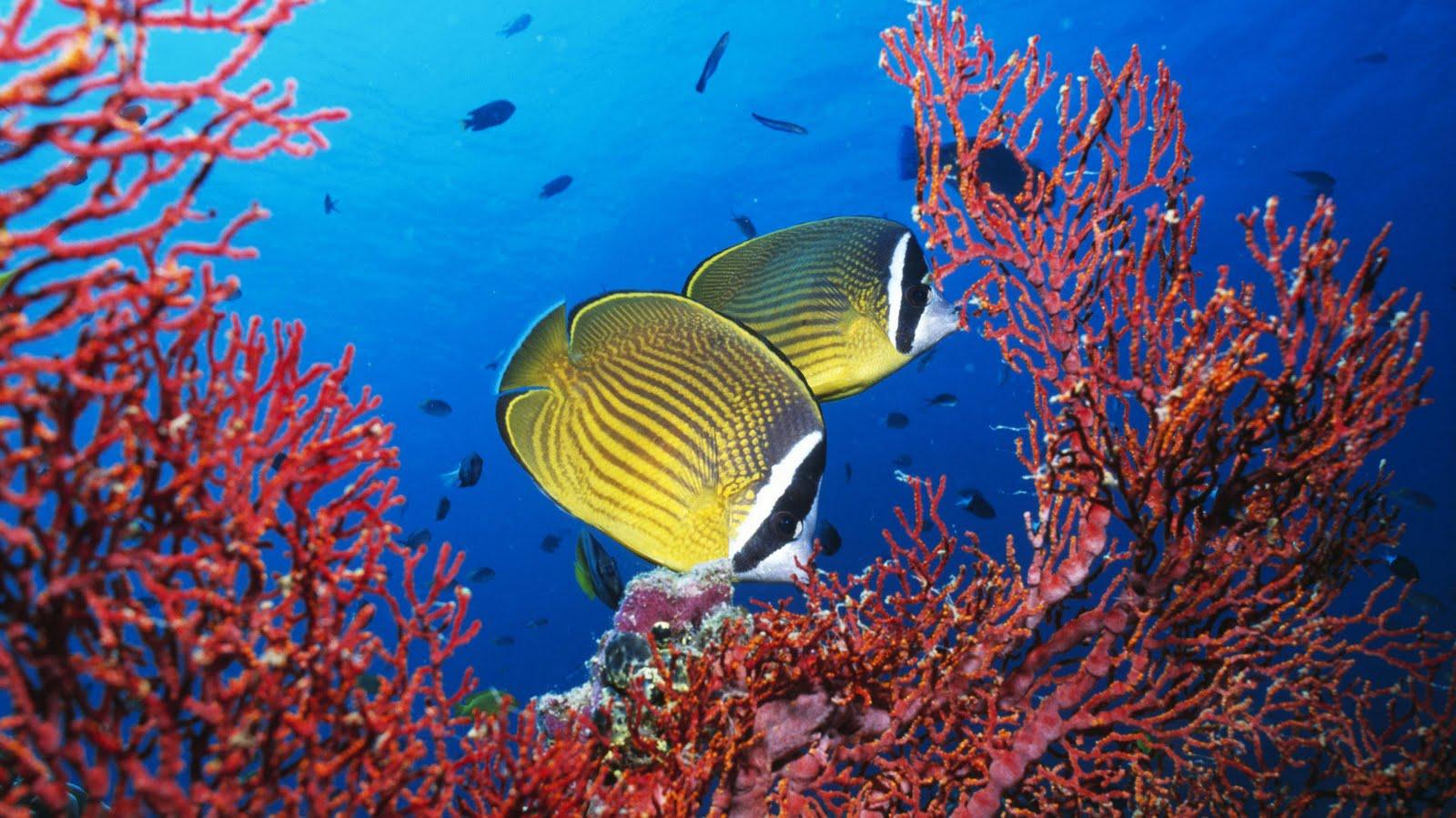 Resultado de imagen para fotos reales del fondo del mar