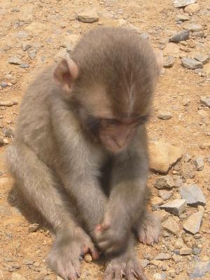 http://2.bp.blogspot.com/_E_ezSeH3Etw/TS-IkgKf1QI/AAAAAAAAAR8/QkWvzrkrtr4/s1600/02+sad+monkey.jpg