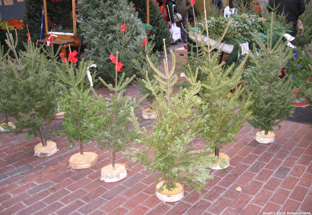 charlie brown christmas trees - Charlie Brown Christmas Tree For Sale