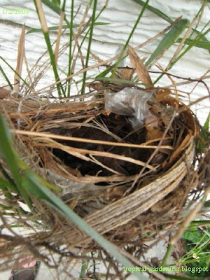 bird's nest in bamboo with plastic