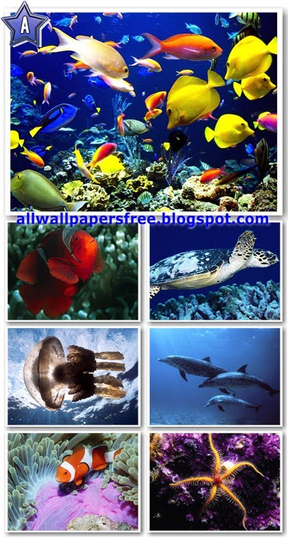 100 Beautiful Life Under the Sea Wallpapers 1280 X 1024