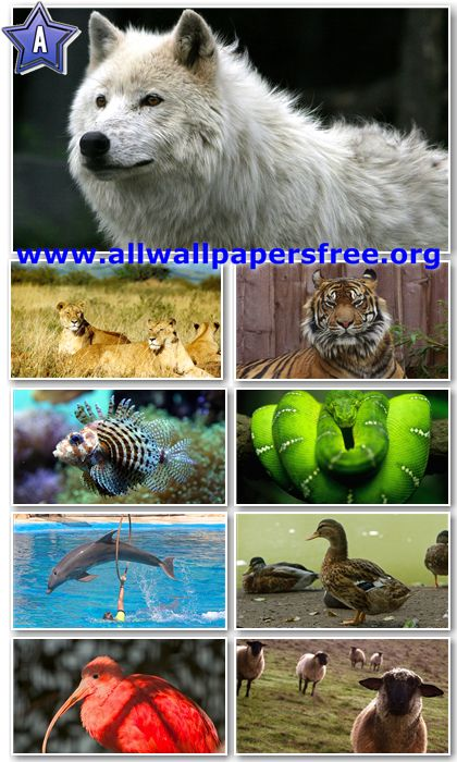 40 Amazing Animals Wallpapers Full HD 1080p [Set 5]