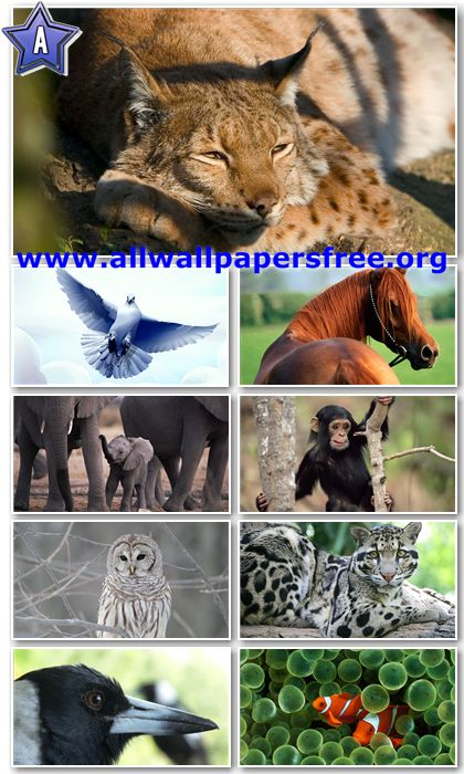 40 Amazing Animals Wallpapers Full HD 1080p [Set 6]