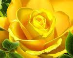 Regalo una rosa a la amistad desde el blog de Any