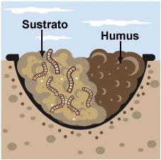 La quimica del suelo xd la materia org nica del suelo for Suelo organico para dibujar